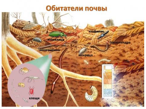Hệ sinh thái trong lòng đất