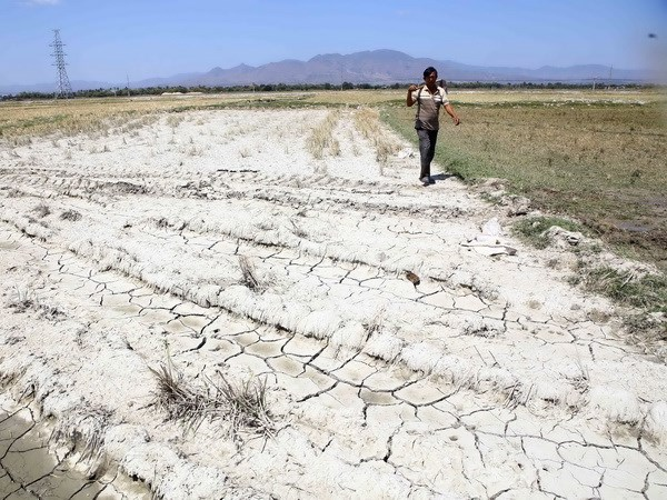đất nhiễm mặn