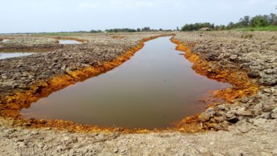 đất nhiễm phèn
