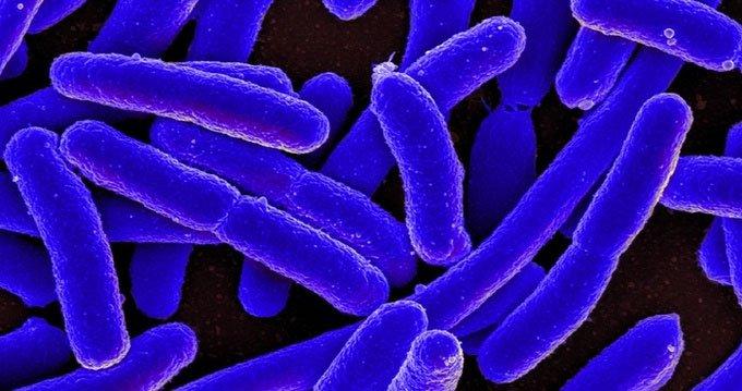 Penicillin là loại thuốc kháng sinh đầu tiên trên thế giới.