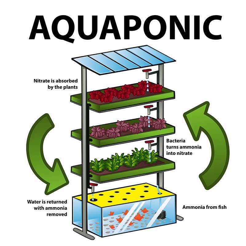 hệ thống aquaponic