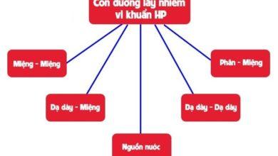 cách thức lây nhiễm HP