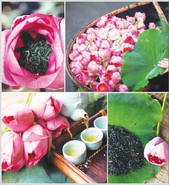 trà hoa sen
